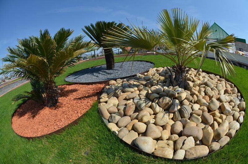 Massif palmier